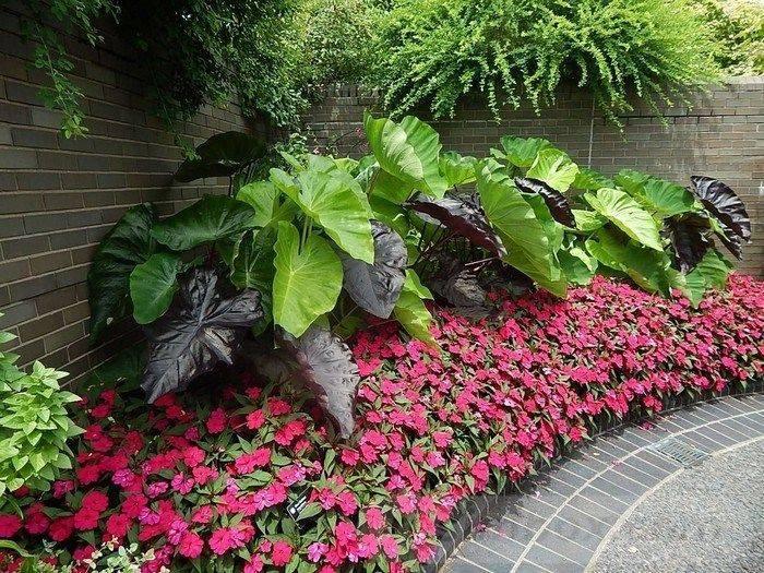 tropical garden ideas-57843176450952951