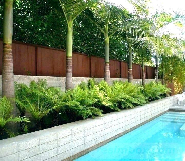 tropical garden ideas-569212840402437269