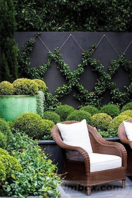tropical garden ideas-746119863246939238