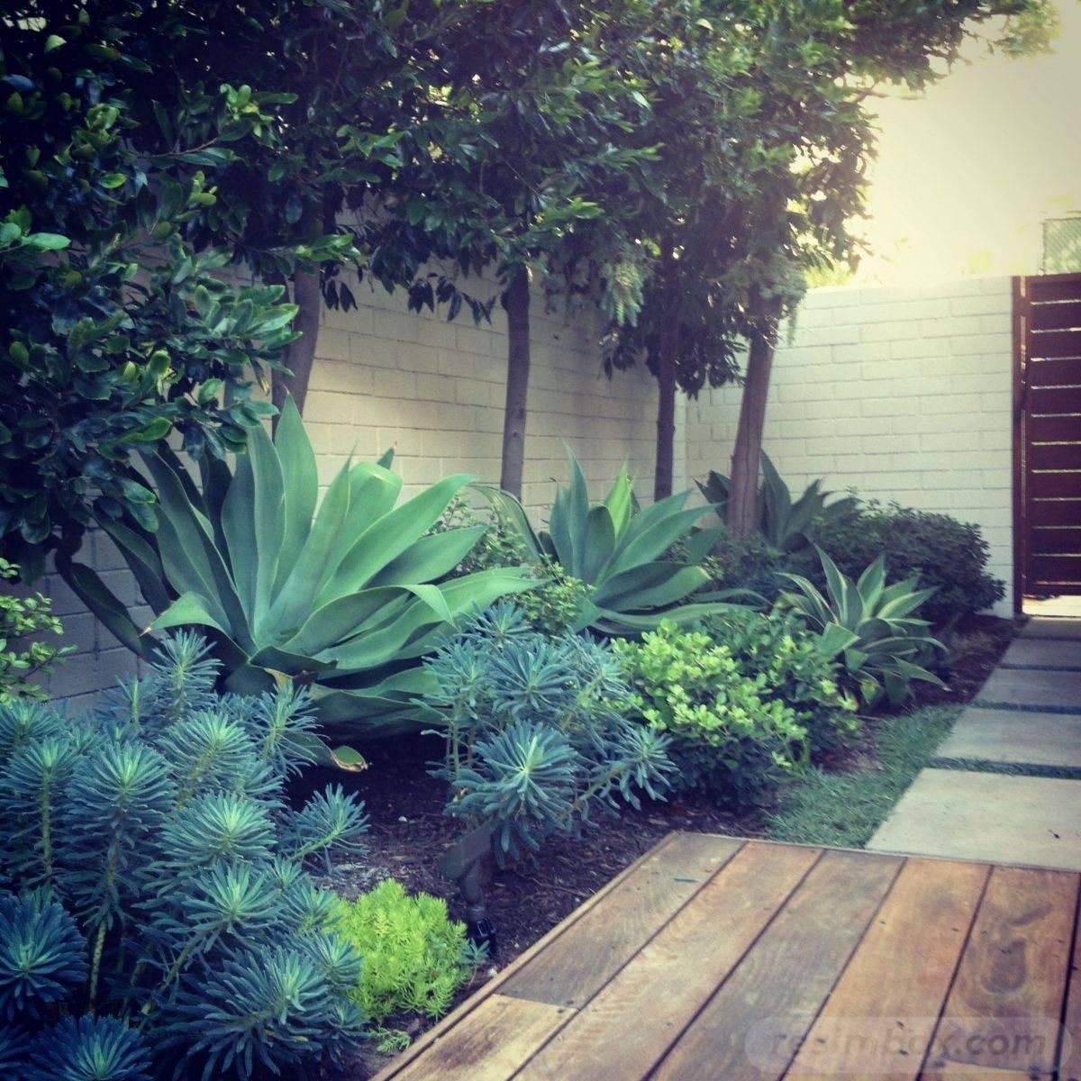 tropical garden ideas-389561436517404779