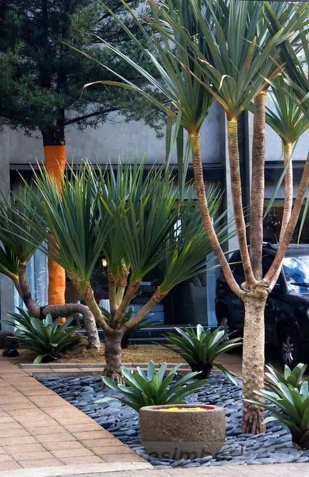 tropical garden ideas-807411039424352865
