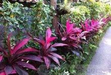 17 Perfect Tropical Garden Ideas For Big Family