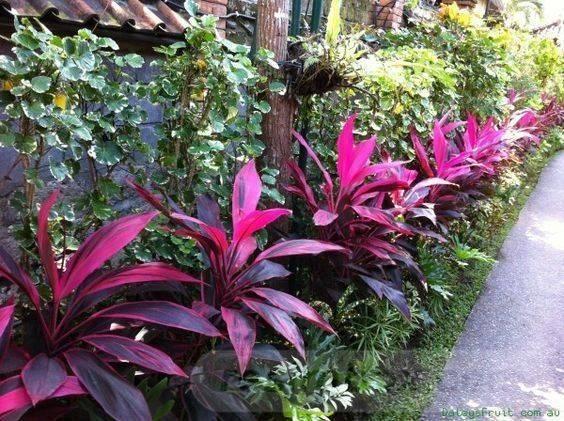 tropical garden ideas-807411039424232829