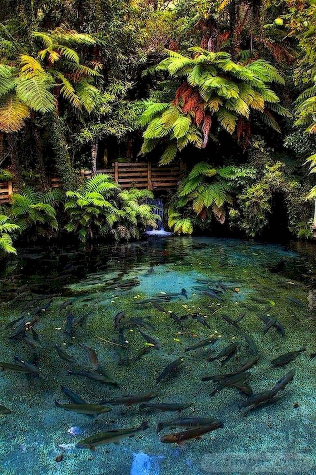tropical garden ideas-687080486881288671