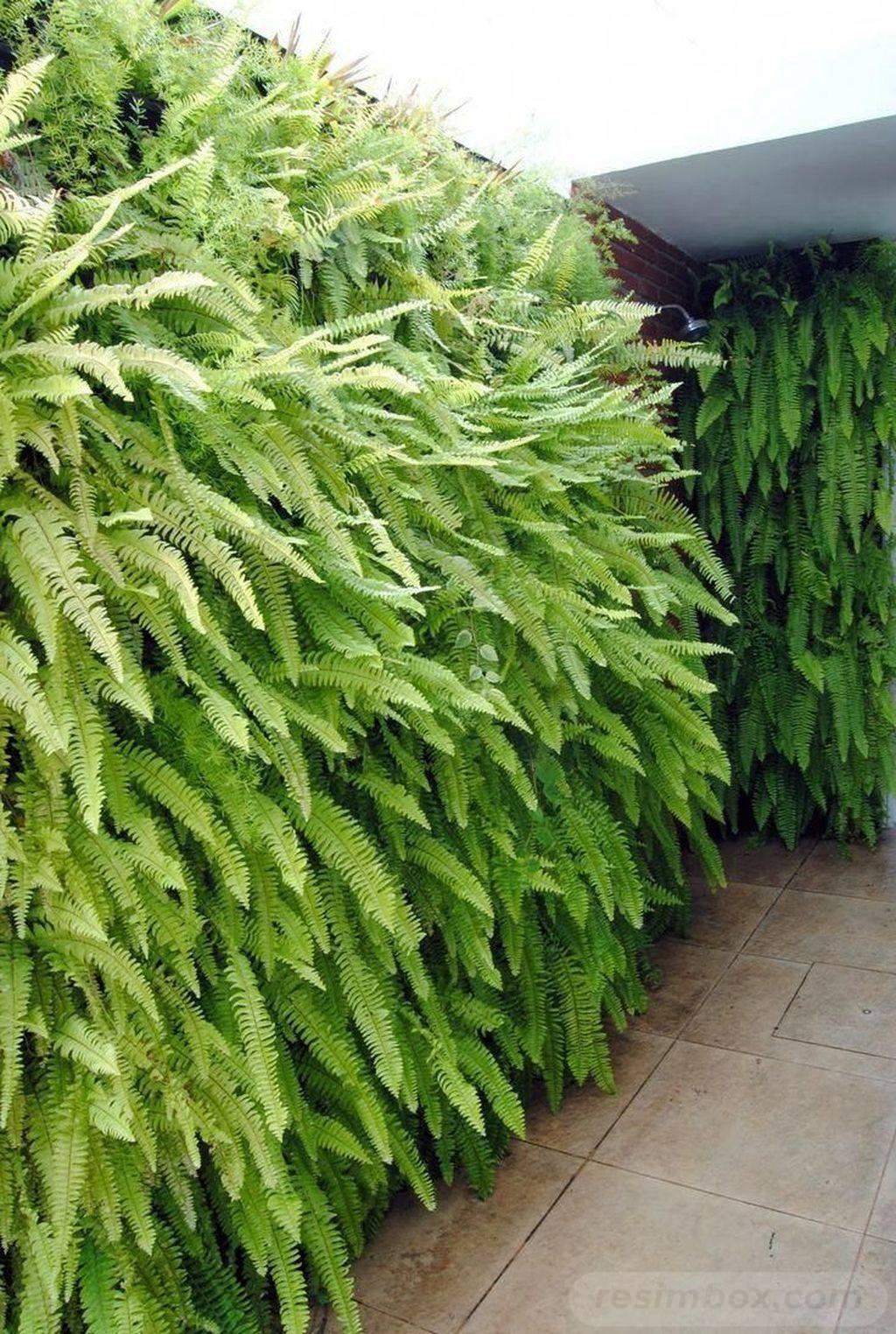tropical garden ideas-603060206334371959