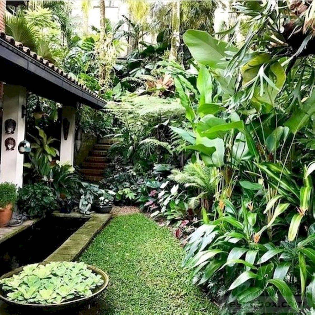 tropical garden ideas-588423507545035548