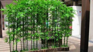 15 Most Popular Tropical Garden Ideas For Small Gardens