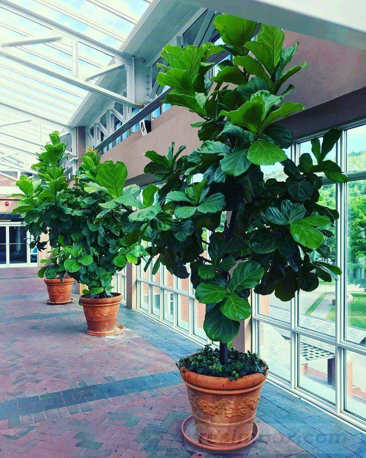 tropical garden ideas-530932243571743840