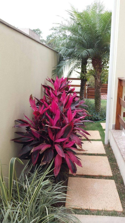 tropical garden ideas-53550683055167041