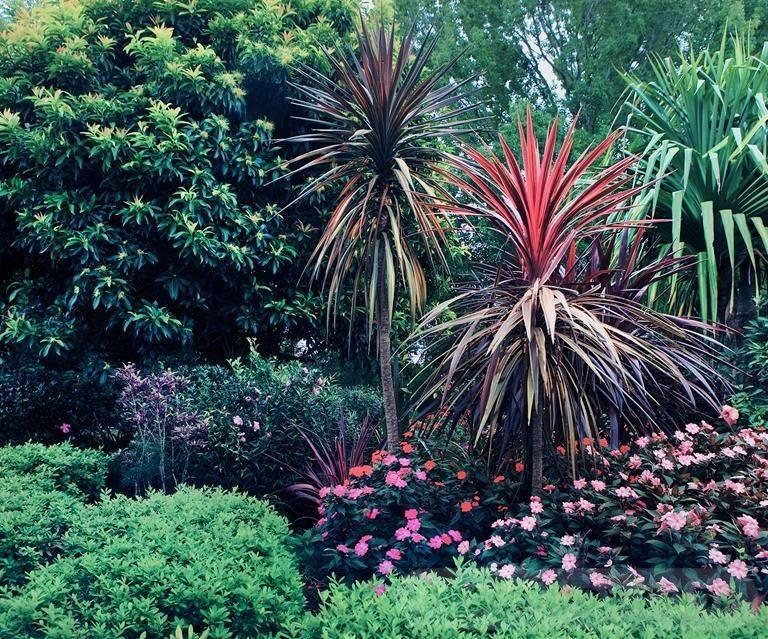 tropical garden ideas-306033737177917945