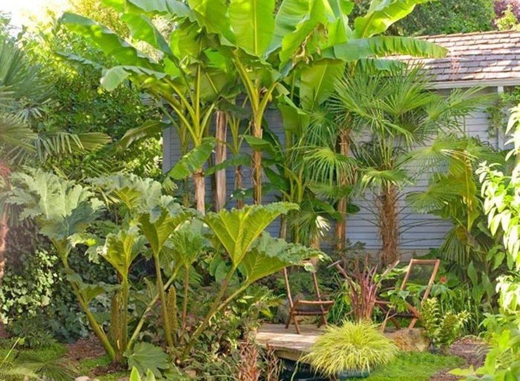 tropical garden ideas-366761963403304986