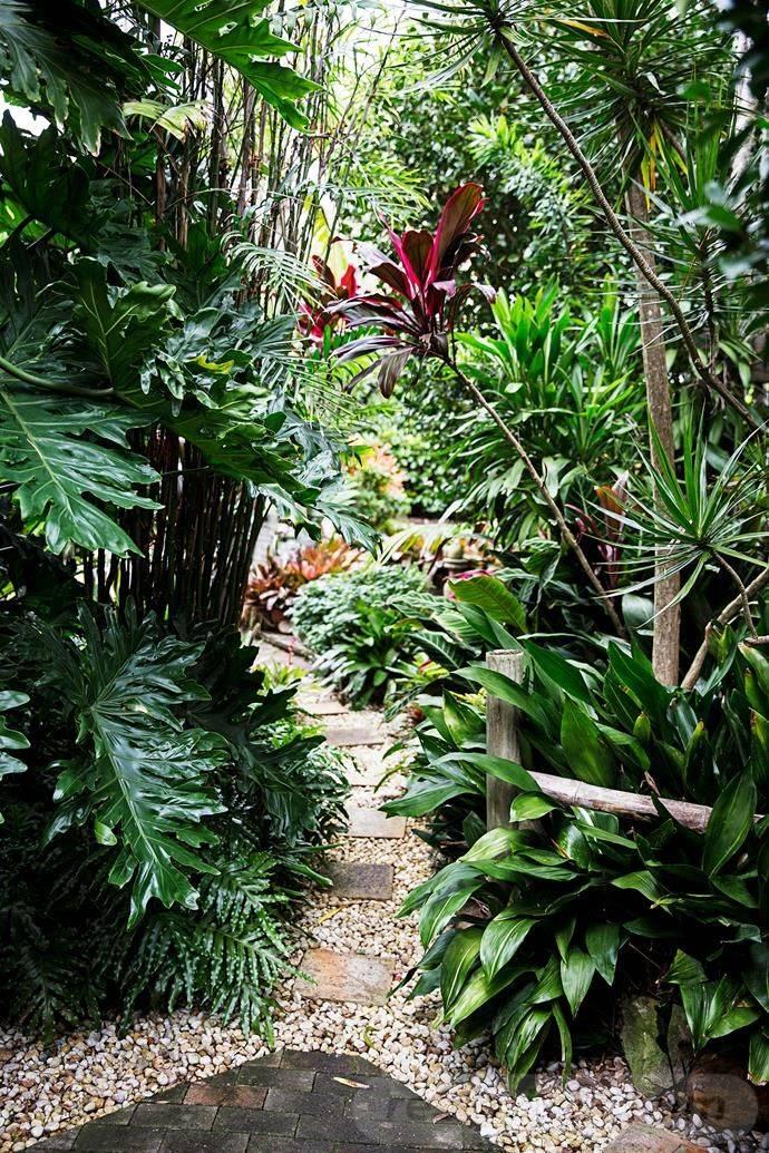 tropical garden ideas-163044448996804566
