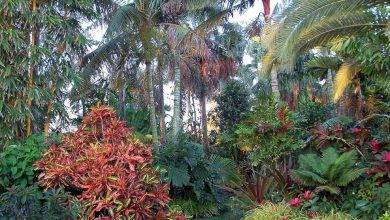 20 Exquisite  Tropical Garden Ideas Queensland