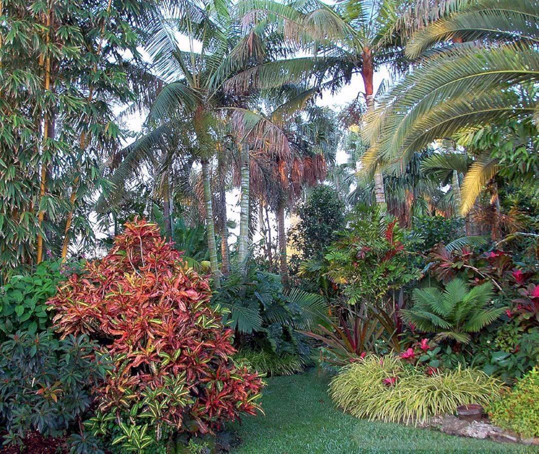 tropical garden ideas-450782243951945340