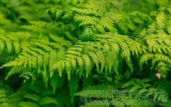 tropical garden ideas-338895940710235456