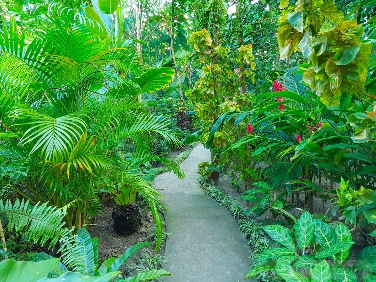 tropical garden ideas-515943701058427092