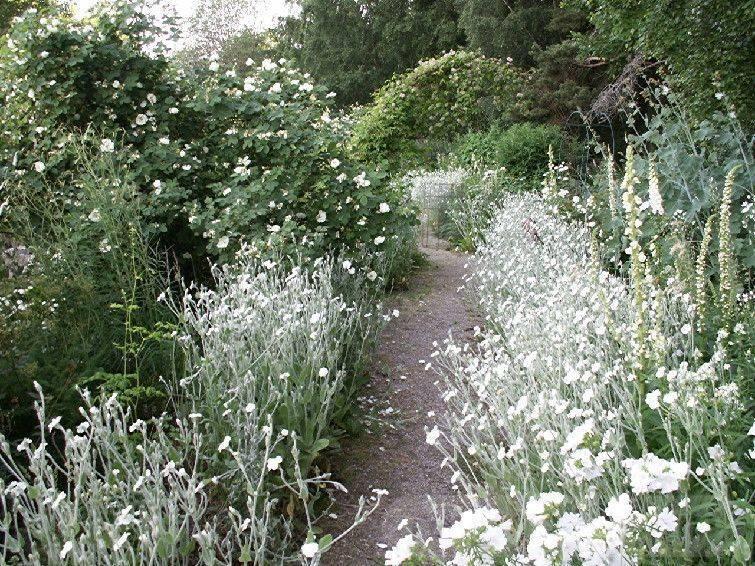 tropical garden ideas-289215607319652395