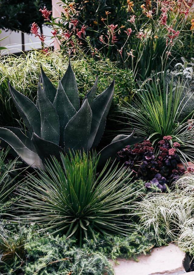 tropical garden ideas-403353710376143913