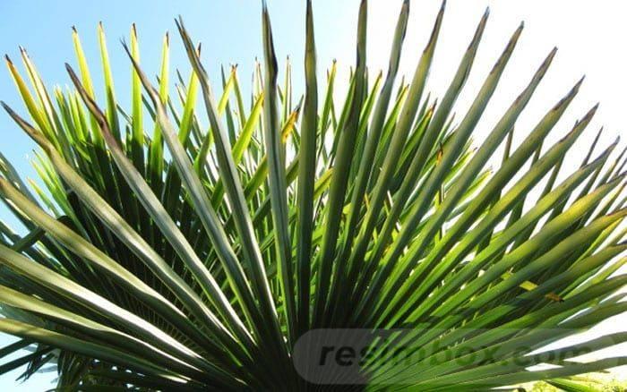 tropical garden ideas-508132770454279760