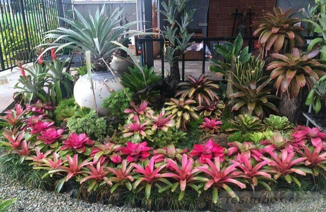 tropical garden ideas-442900944601410206