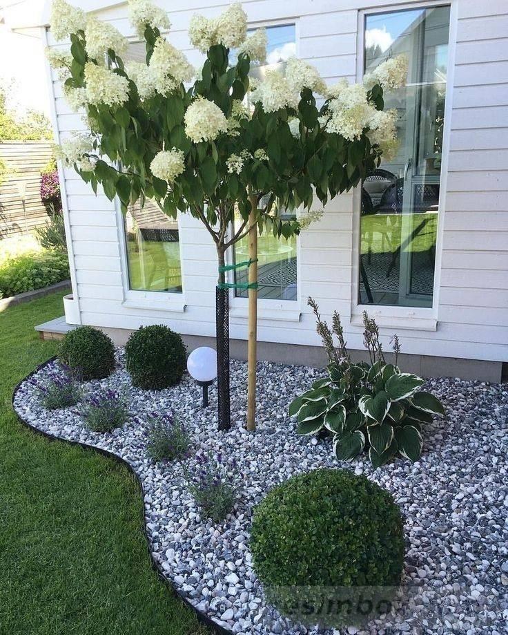 tropical garden ideas-744149538409922122