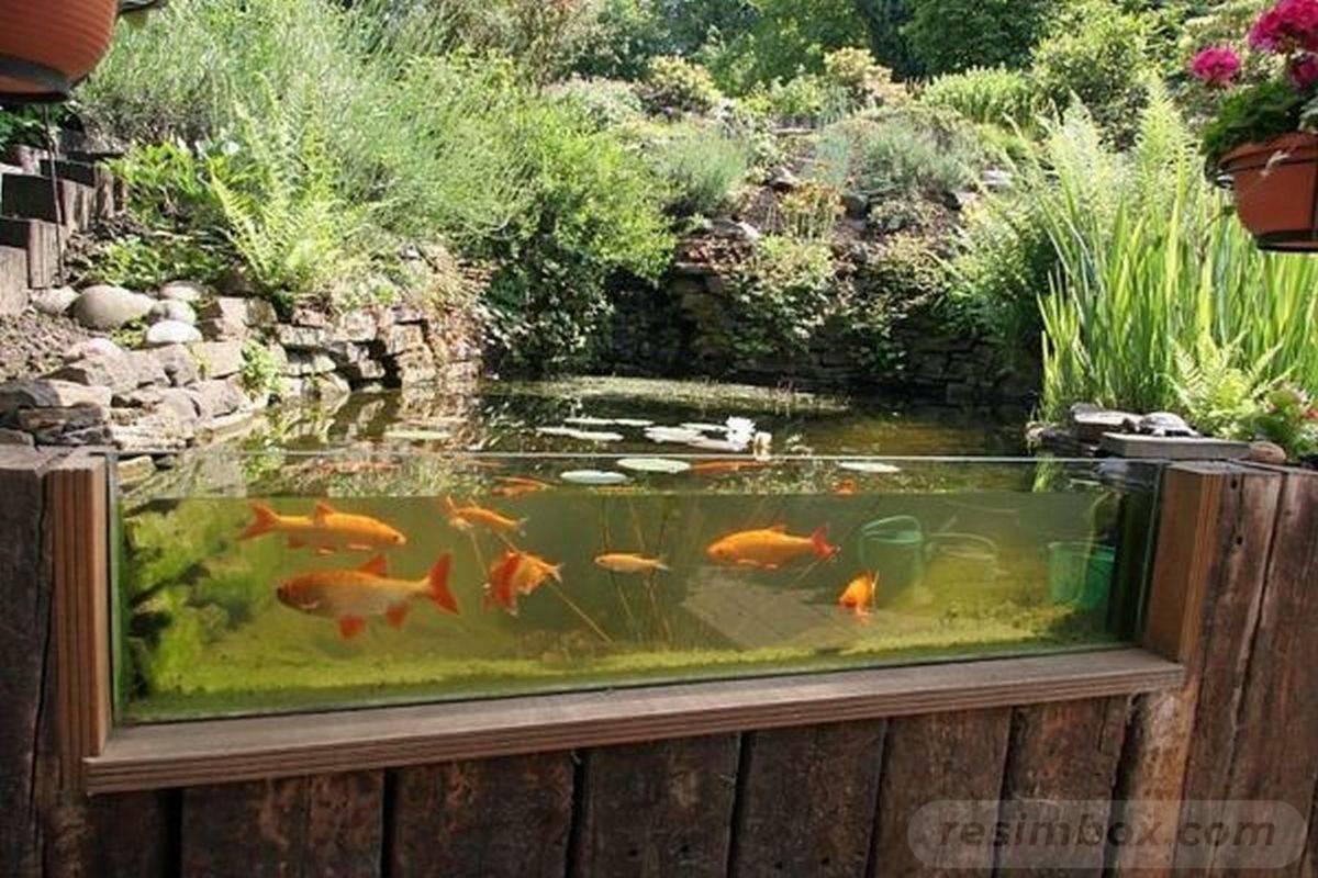 tropical garden ideas-812759063980337970