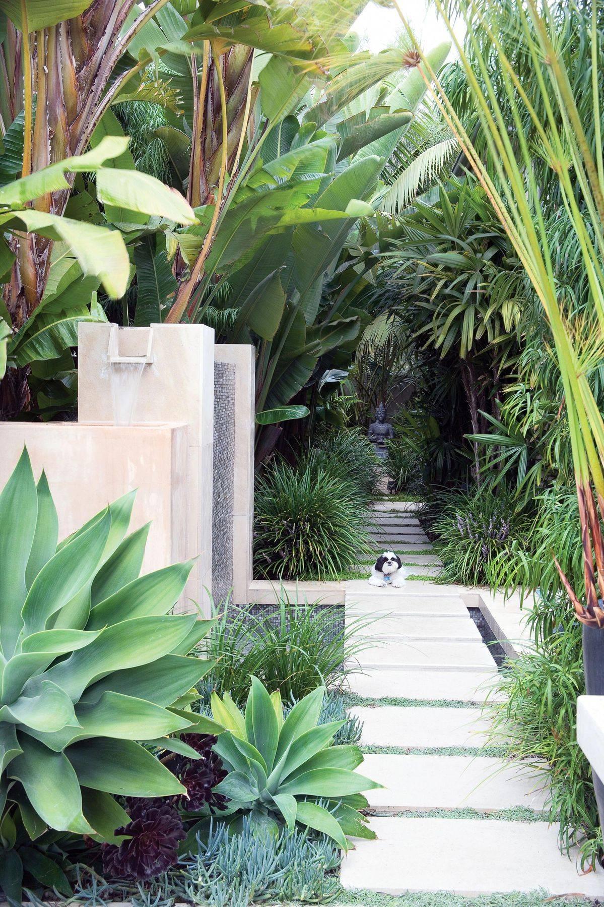 tropical garden ideas-452822937530248887