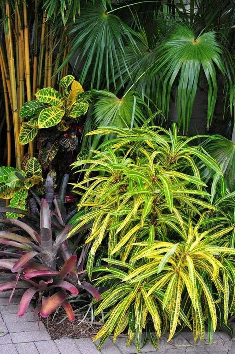 tropical garden ideas-736549714036896772