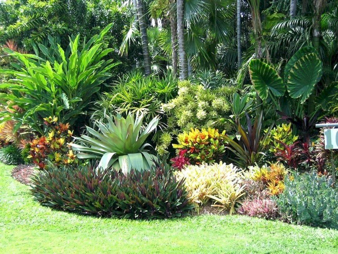 tropical garden ideas-411797959676134136