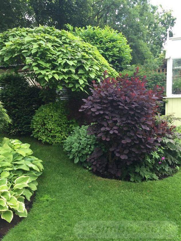 tropical garden ideas-634726141213469998