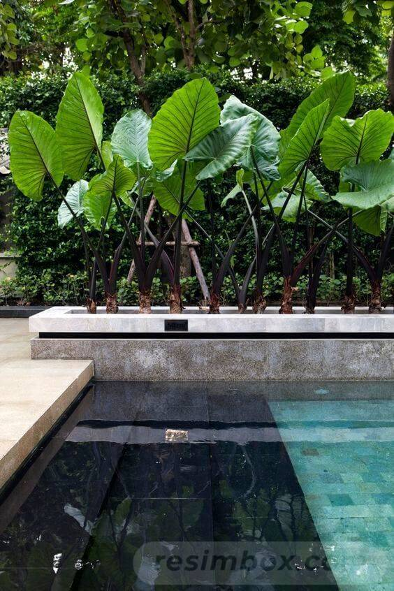 tropical garden ideas-346284658847367272
