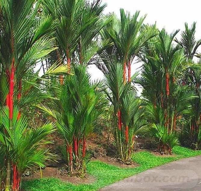tropical garden ideas-807411039424259083