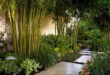 22 Exceptional Tropical Gardens