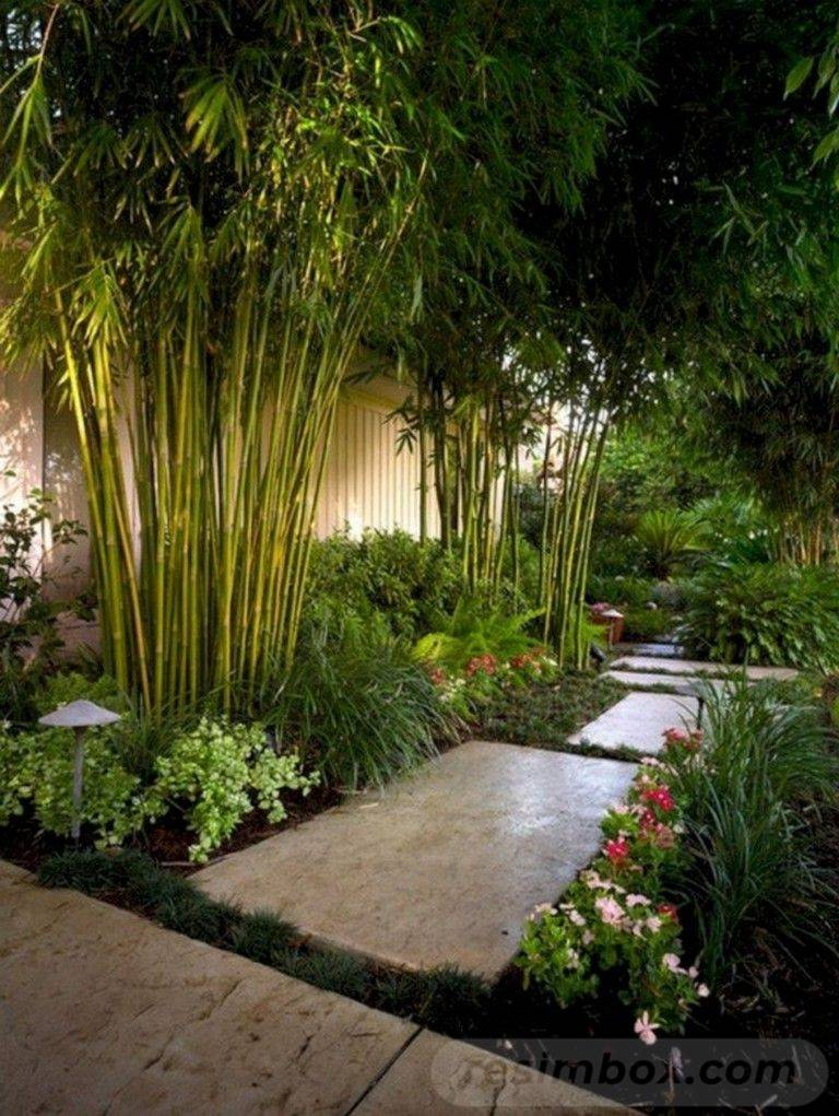 tropical garden ideas-711357703623310042