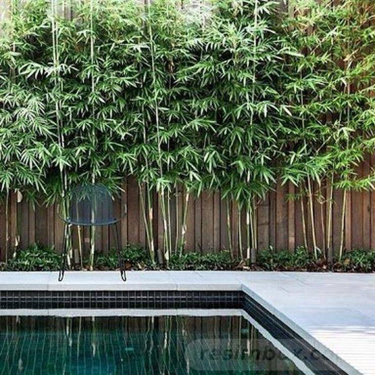 tropical garden ideas-734931232921653732