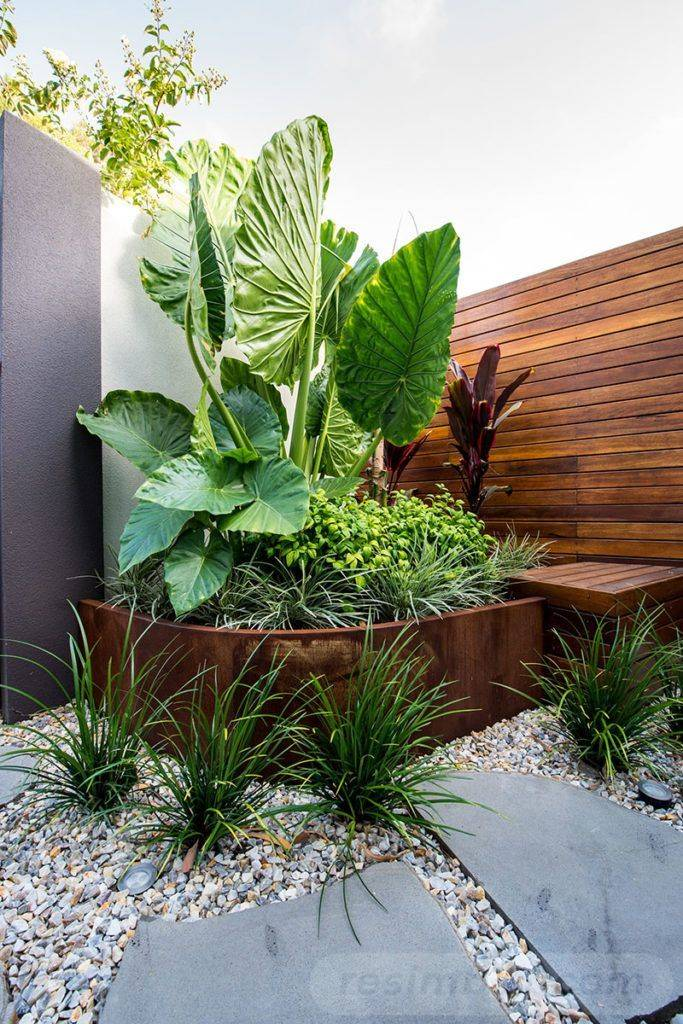 tropical garden ideas-670262357021567396