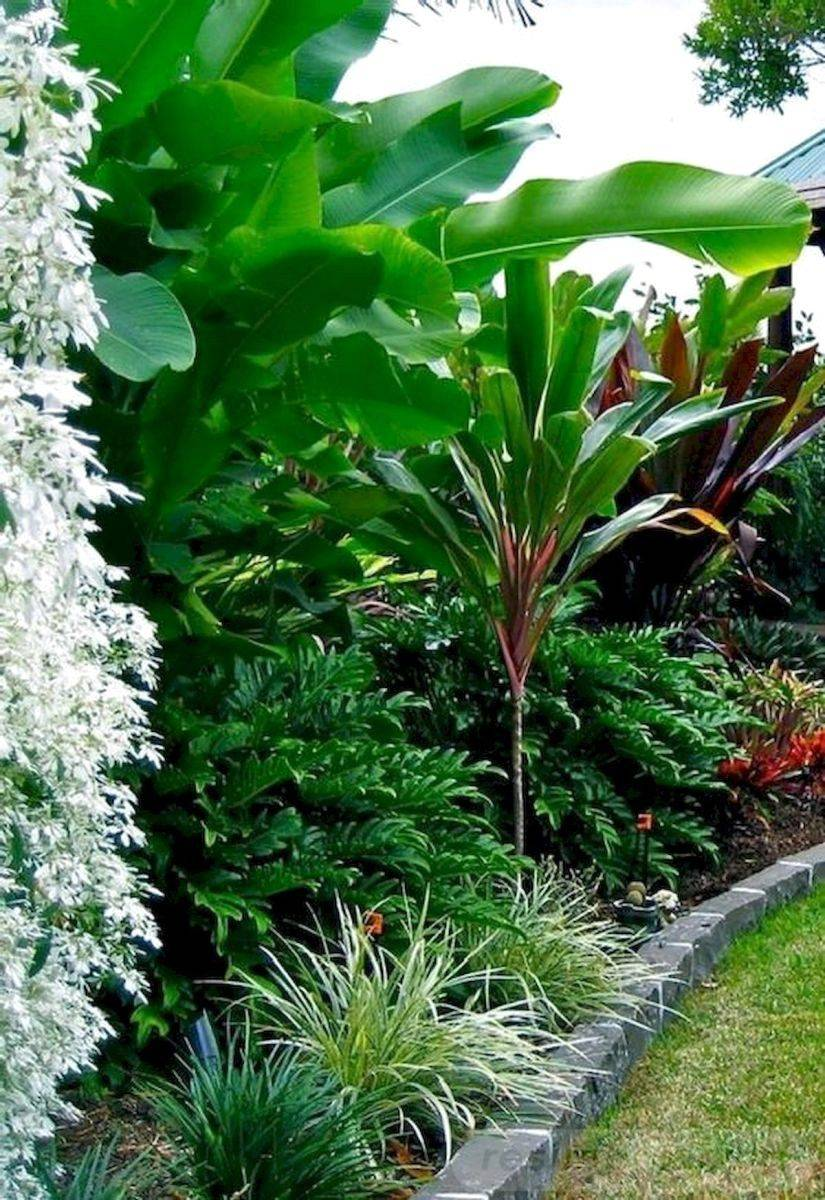 tropical garden ideas-588423507545035201