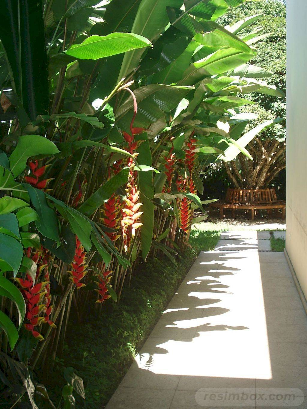 tropical garden ideas-613334042981650689