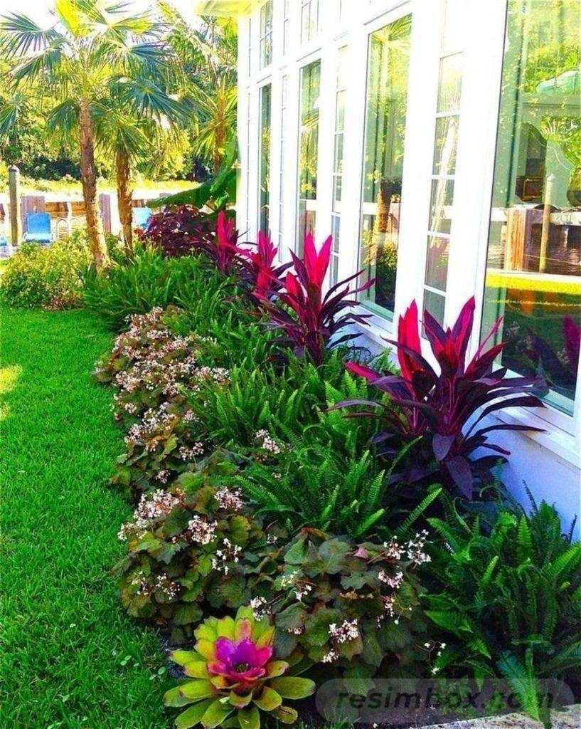 tropical garden ideas-663084745117934236