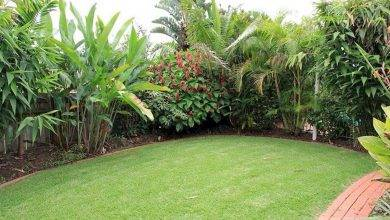 22 Most Popular Tropical Gardens