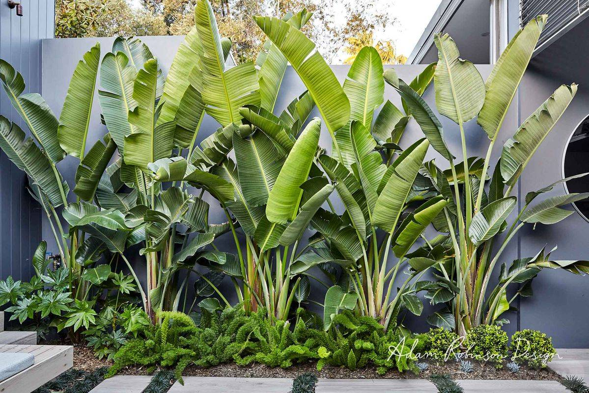 tropical garden ideas-569564684123499155