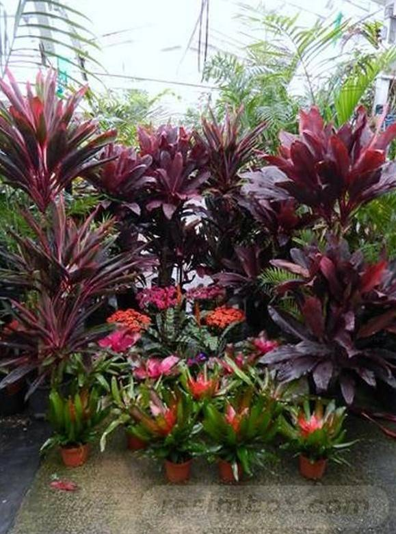 tropical garden ideas-611504455631332694