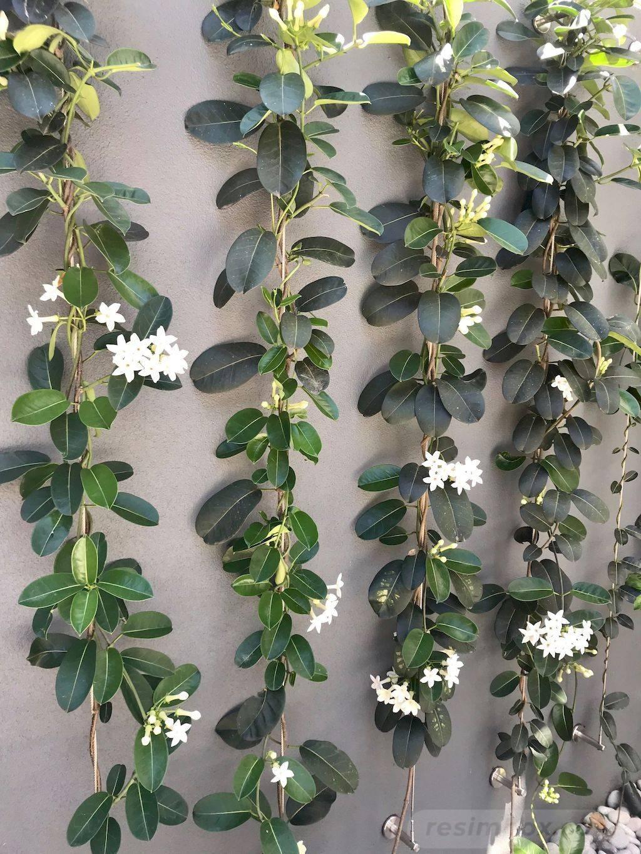 tropical garden ideas-516928863479906540