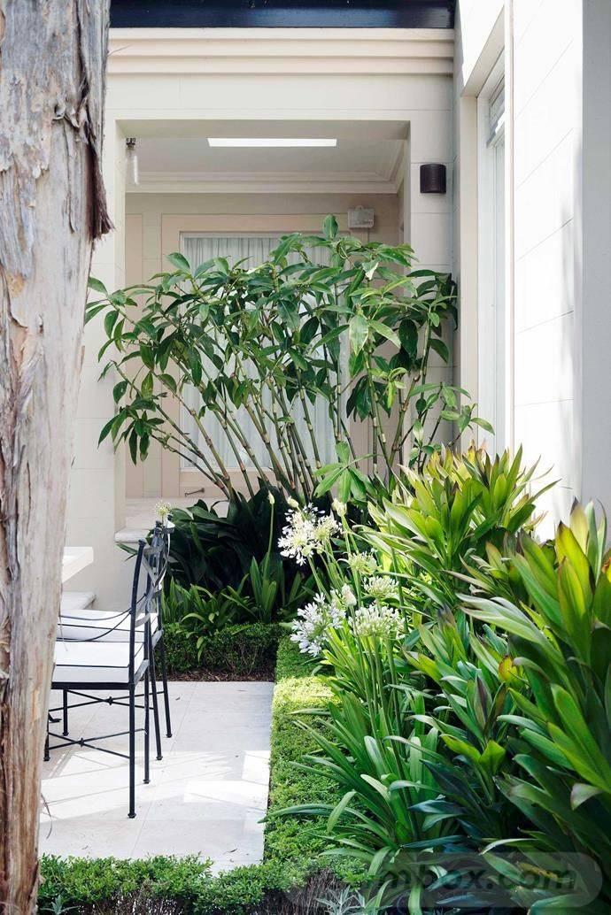 tropical garden ideas-128563764350037075