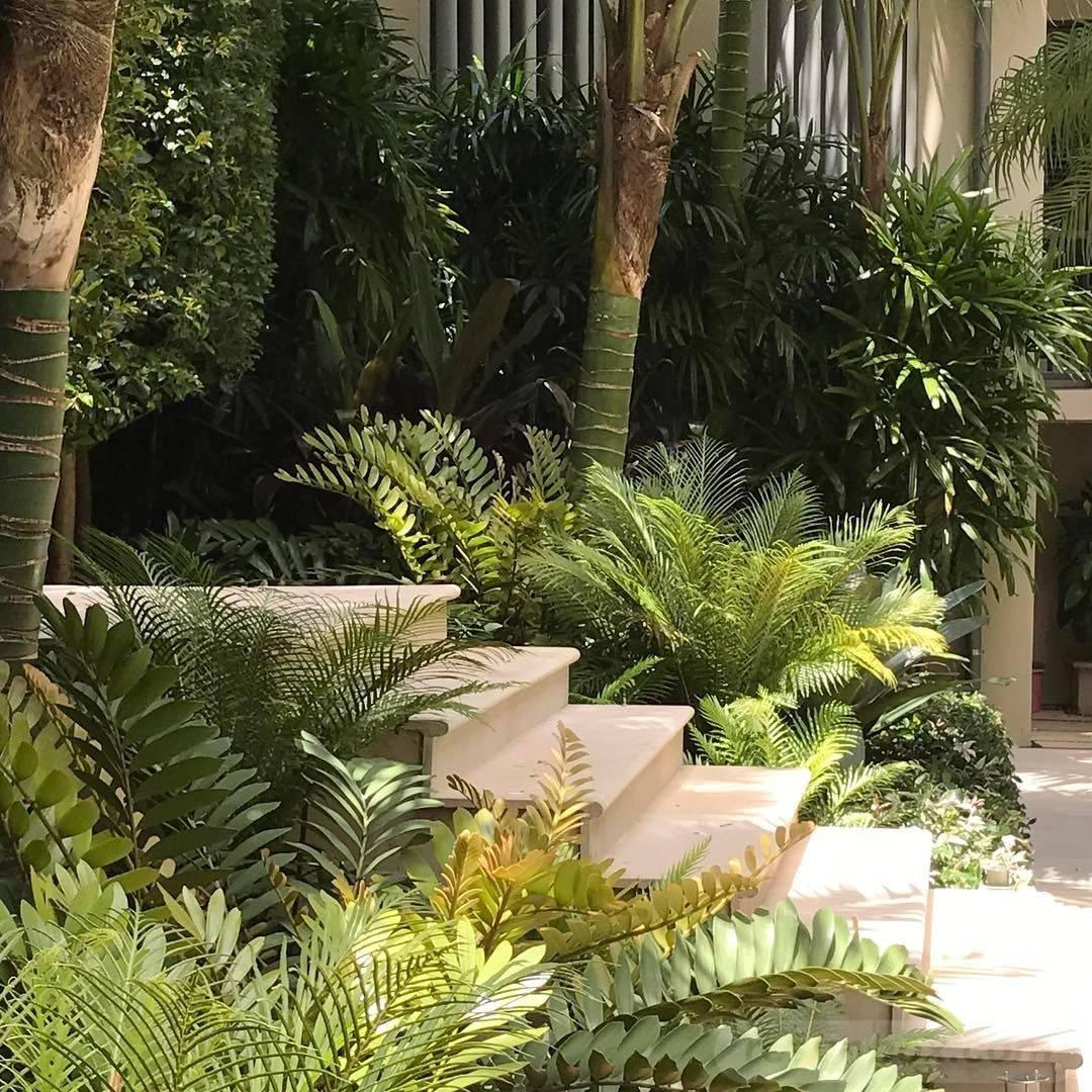 tropical garden ideas-476466835575250726