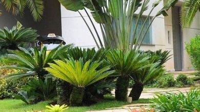 15 Best Tropical Shade Gardening Ideas – How To Create A Tropical Shade Garden