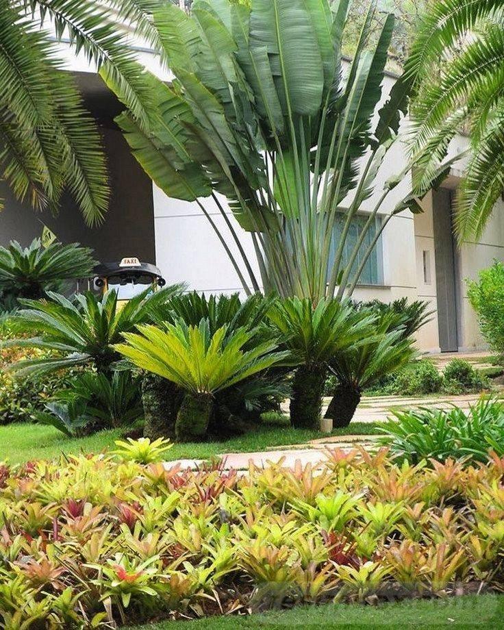 tropical garden ideas-192388215319344274