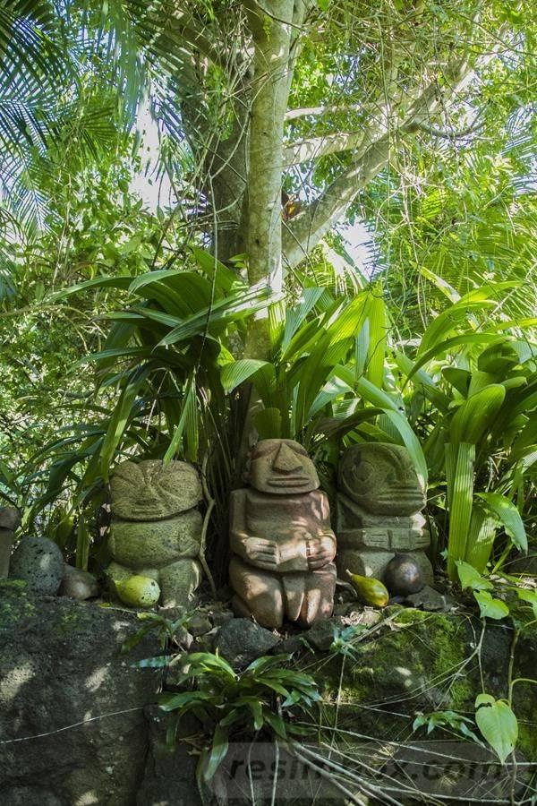 tropical garden ideas-837317755702141567