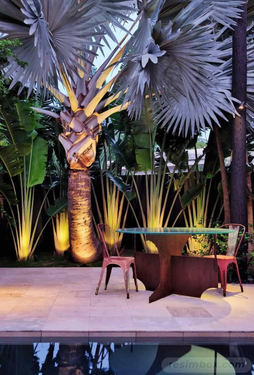 tropical garden ideas-517351075943730688