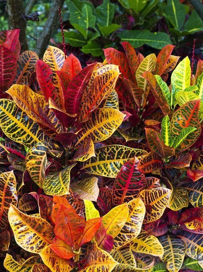 tropical garden ideas-456552480974564066